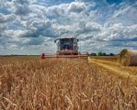 Cena zrna veća briga od otkupa