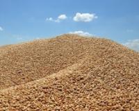 U nedelji za nama prekinut rast cena žitarica