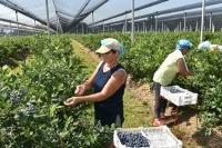 Turci zainteresovani za srpsku borovnicu, malinu i jagodu