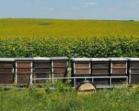 Tematski skup o trovanju pčela