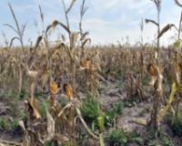 Uticaj vremenskih uslova na poljoprivrednu proizvodnju i poslovanje zemljoradničkih zadruga u 2017. godini