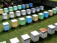 Ulaganja u razvoj pčelarstva