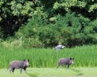 Građanskom naukom za očuvanje divljih sisara