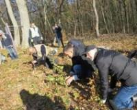 Na Fruškoj gori zasađeno 13.000 stabala hrasta