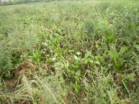 Važni pravo vreme i pravilan izbor herbicida