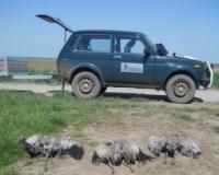 Kazna 400.000 dinara zbog trovanja ždralova
