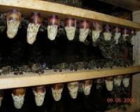 Pčelinje mleko - najmoćnija prirodna hrana