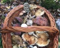 Fruška gora okupila ljubitelje gljiva