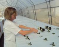 Svemirska tehnologija za spas našeg krompira