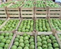 Izvoz voća i povrća u Rusiju nije ograničen