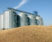 Otvoren put srpskoj pšenici za Egipat