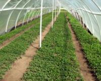 Jesenje subvencije za  poljoprivrednike na teritoriji grada Užice
