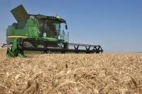 Žetva pšenice se zahuktala, otkupljivači nude 19 dinara