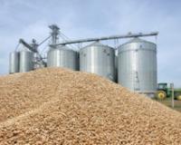 Zemljoradnička zadruga AGRO-MV iz Sivca gradiće sušaru za žitarice