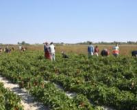 Agro Info Karavan obilazi Srbiju i pojašnjava proceduru angažovanja sezonskih radnika