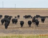 Kazahstanski proizvođači govedine se ne šale