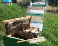 Pčelarska godina počinje u avgustu