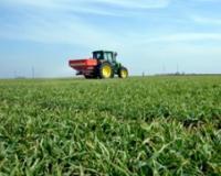 S prihranjivanjem pšenice ne treba žuriti