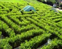 Presedan pejzažne arhitekture u Šumadiji - zeleni lavirint!