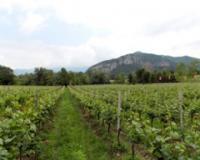 Pokrajina sufinansira podizanje protivgradnih mreža i zasada voćaka, vinove loze i hmelja