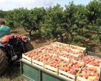 Bespovratna sredstva za poljoprivredne zadruge