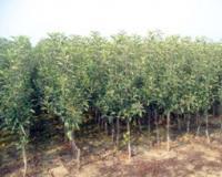 Rezultati kontrola hrane inspekcijskih službi Ministartva poljoprivrede, šumarstva i vodoprivrede