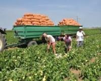 U legalne tokove uvedeno 47% sezonskih radnika u poljoprivredi