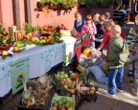 Organsko voće i povrće iz školske bašte
