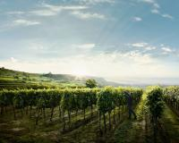 Novi biopesticid namenjen vinarima u konvencionalnoj i organskoj proizvodnji očekuje se 2023.