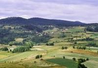 Organska poljoprivreda okosnica razvoja ruralnih sredina