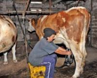 Analiza mleka za vreme vanrednog stanja samo sredom i četvrtkom
