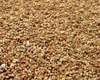 Zabeležen negativni cenovni trend pšenice