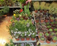Prvi sajam lekovitog, začinskog, ukrasnog bilja i meda u Vranju