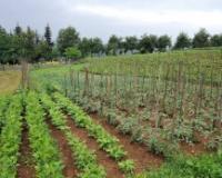 Grad Novi Sad subvencioniše organsku proizvodnju s pet miliona dinara