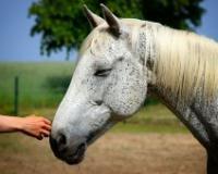 Spomenik neraskidivoj vezi ljudi i životinja