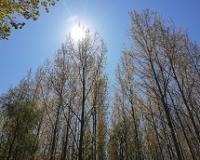 Akcija Zasadi drvo u pet vojvođanskih opština