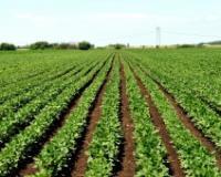 Cene industrijskog bilja porasle  84, 8 odsto za godinu dana