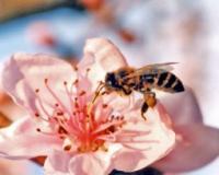 PČELE PAMETNIJE NEGO ŠTO SE MISLILO